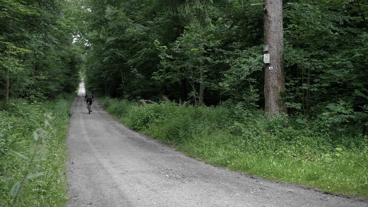 Stumpjumper auf Forstweg
