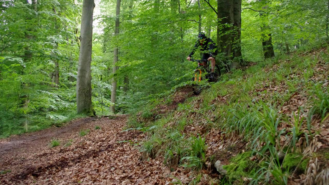 Stumpjumper 650 Carbon im Wald