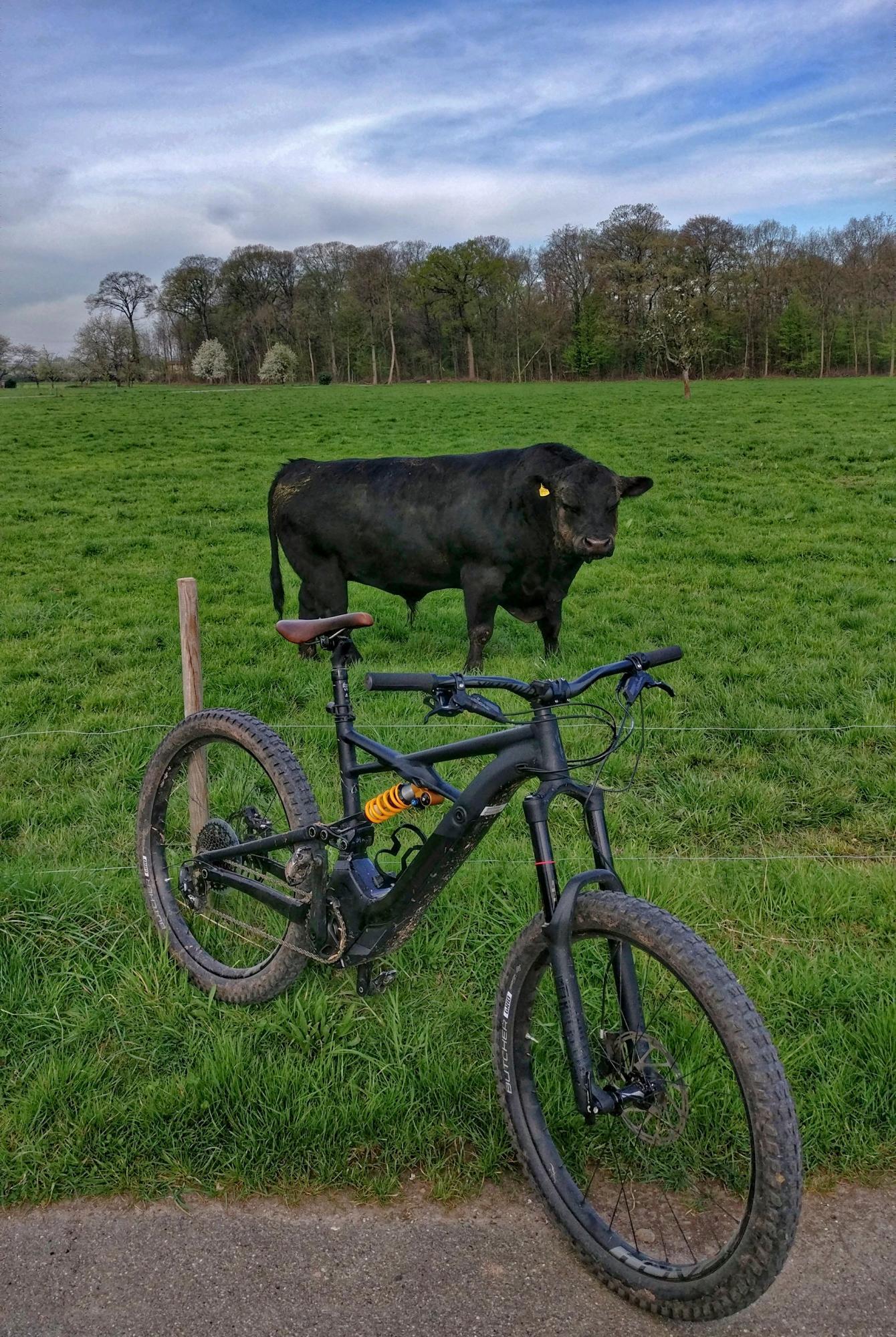 Seelenverwandte Turbo Kenevo und junger Stier