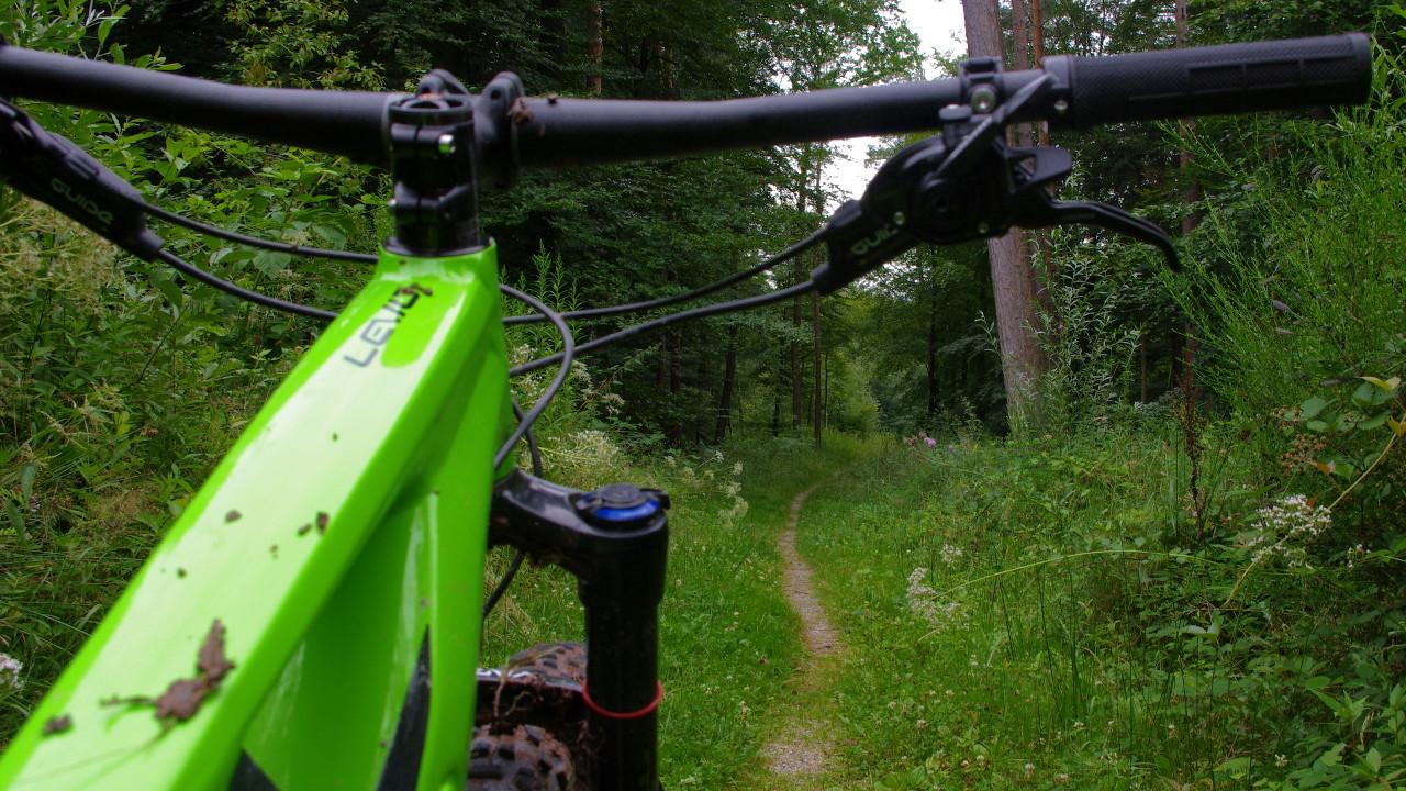 Singletrail im Wald Turbo Levo