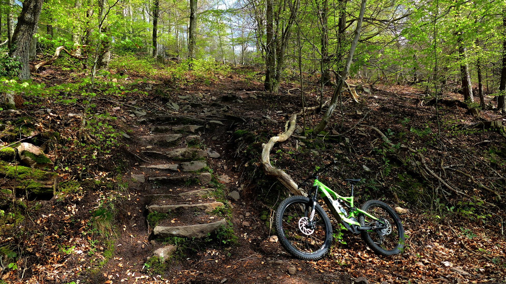 Turbo Levo vor einer steilen Natursteintreppe im Wald